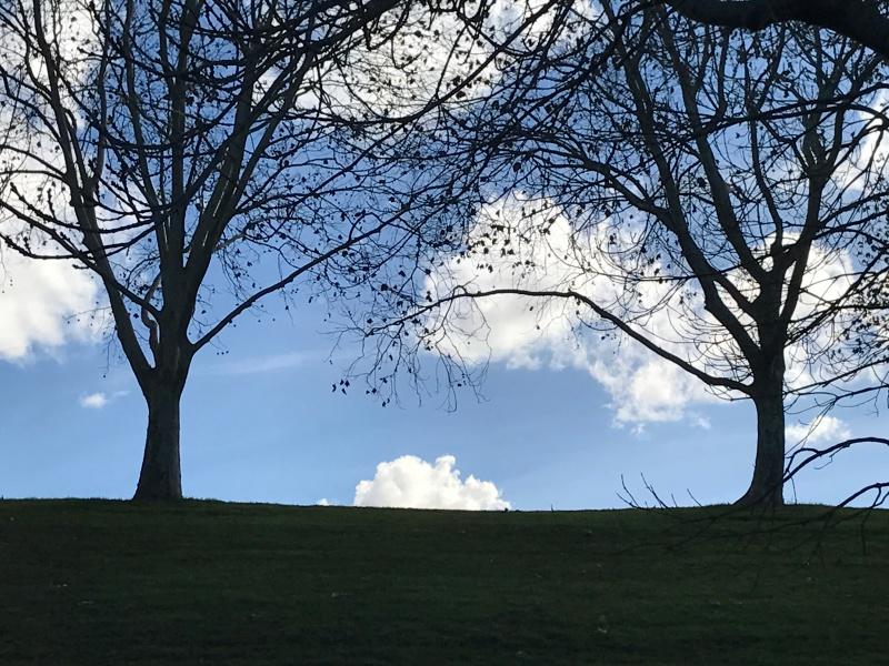 árboles sin hojas con cielos celeste Laurence Australia